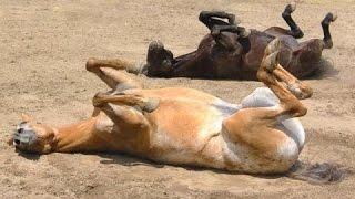 面白い馬 - 面白い馬動画。コンピレーション