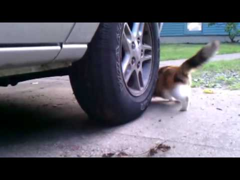 Cat And Mouse Run Around A Tire