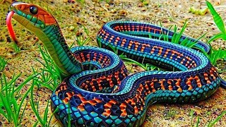 10 Most Beautiful Snakes In The World