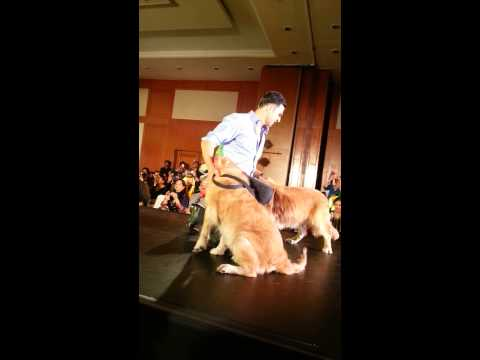 Akshay Kumar walks the ramp for canine and couture