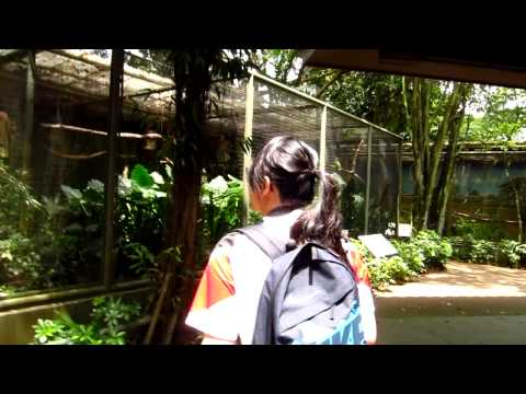 Parrot Paradise at Jurong Bird Park