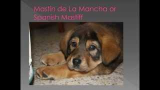 Dog Breed Name Cross-Reference part 9-M