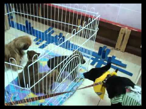 В Тобольске бездомные животные ждут хозяев