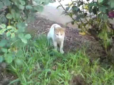 My cat playing