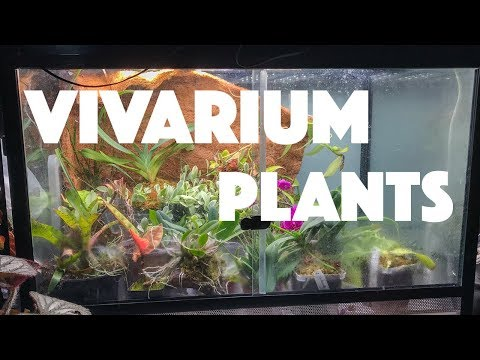 Vivarium plant Greenhouse Tour!_Terrárium, Vivárium