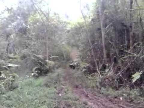 trilhas em carmesia