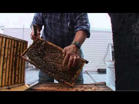 Backyard beekeepers help honeybees recover from mysterious die-off