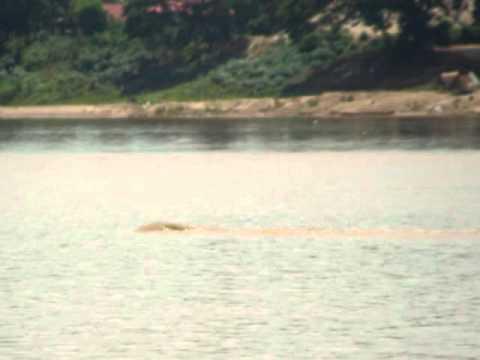 พยานาค แม่น้ำโขง - ผมมีภาพถ่ายที่ถ่ายได้ที่ลำน้ำโขงมาให้ดูกันครับ...