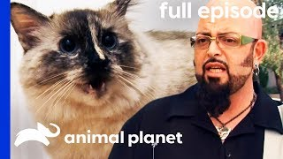 Crazed Cat Is Tearing A Friendship Apart | My Cat From Hell (Full Episode) by Animal Planet