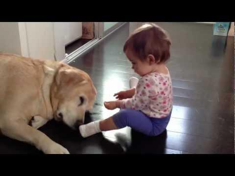 labrador e bambini: amorevolissimi!