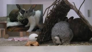 How To Cope When Your Rabbit Has An Abscess (Part 2) - Teeny's Tips