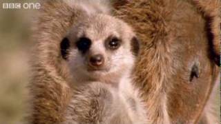 Video Funny Talking Animals - Walk On The Wild Side - Episode Two Preview - BBC One MP3, 3GP, MP4, WEBM, AVI, FLV Juni 2018