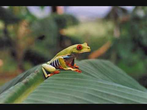 Costa Rica(Represento-Grupo Marfil)