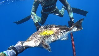 Video spearfishing adventures 20: Attica's gold MP3, 3GP, MP4, WEBM, AVI, FLV Oktober 2018