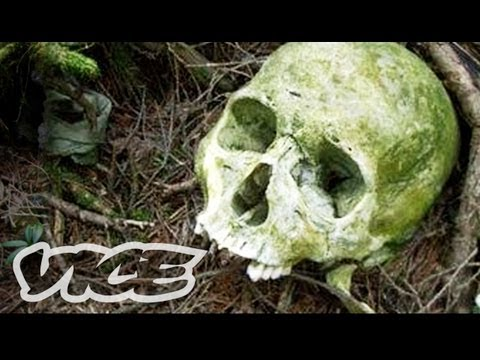 Suicide Forest in Japan - YouTube