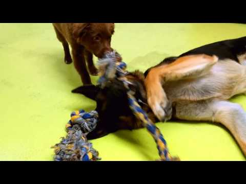 Cute clip of the day – Dexter & Brew Tug