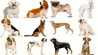 The DOG You Pick Will Reveal Your PERSONALITY - Personality Test | Mister Test