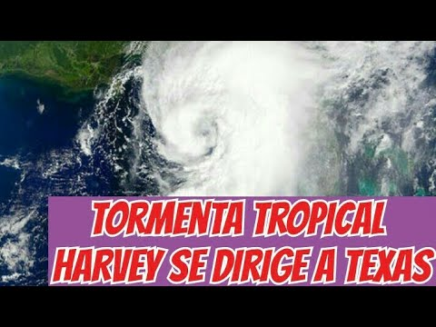 TORMENTA TROPICAL HARVEY COJE FUERZAS Y SE DIRIGE A TEXAS/ 2017