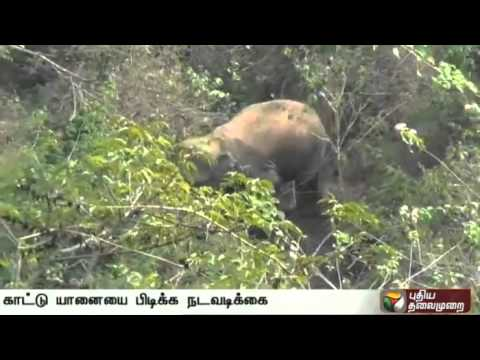 Efforts-towards-capture-of-wild-elephant-attacking-people-at-Bandalur-Nilgiris-to-commence-today