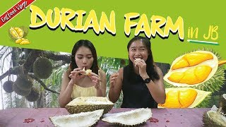 Video WE VISITED A DURIAN FARM IN JOHOR AND TRIED TEN DURIANS! | Eatbook Vlogs | EP 65 MP3, 3GP, MP4, WEBM, AVI, FLV Agustus 2018
