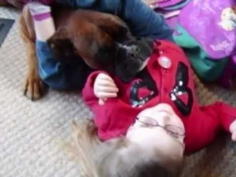 Boxer dog great with kids