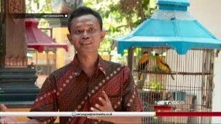 Video NET YOGYA - Kampung Penangkar Burung Desa Wukirsari Bantul MP3, 3GP, MP4, WEBM, AVI, FLV Februari 2019