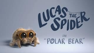 Video Lucas the Spider - Polar Bear MP3, 3GP, MP4, WEBM, AVI, FLV Juni 2018