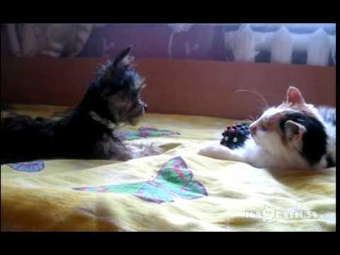 gatto ruba un giochino al cane: le reazioni!