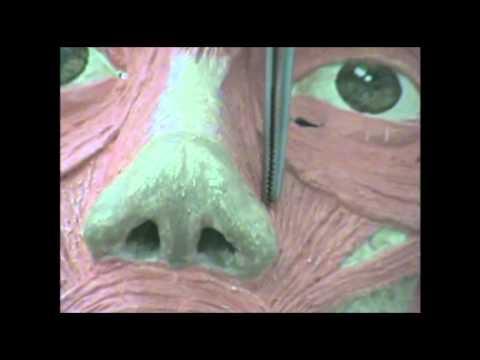 Musculos de la Cara y Huesos del Craneo.flv