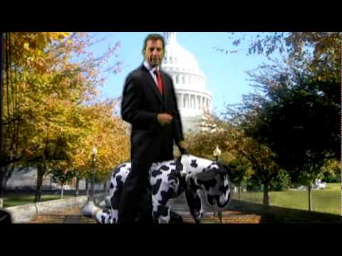 Senate Candidate Freilich on a Cow