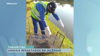 Taquarituba: animais são resgatados durante incêndio em vegetação