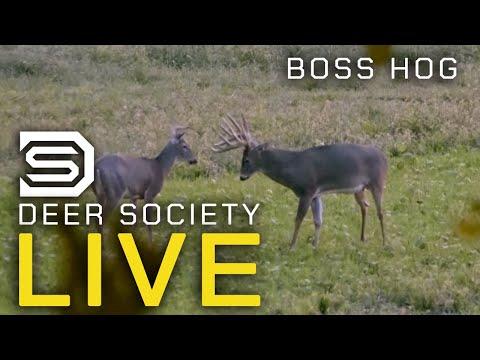 BOSS HOG: Early Season Muzzleloader Hunt! - DS LIVE Episode #6