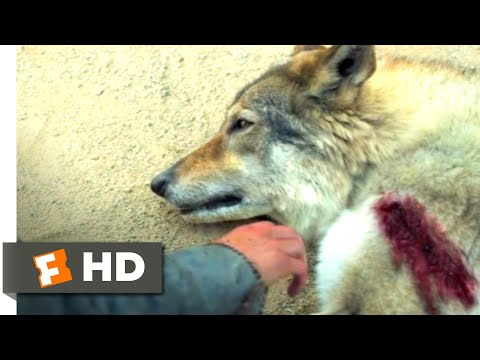 Alpha (2018) - Bonding with a Predator Scene (3/10) | Movieclips
