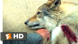 Alpha (2018) - Bonding with a Predator Scene (3/10) | Movieclips