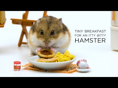 Tiny Breakfast For An Itty Bitty Hamster
