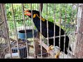 Burung Beo Bicara