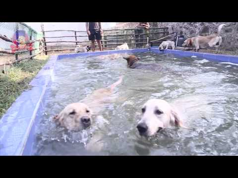 Hotel For Dogs Chennai