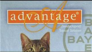 Cat Care&Health : Is Advantage Safe For Cats?