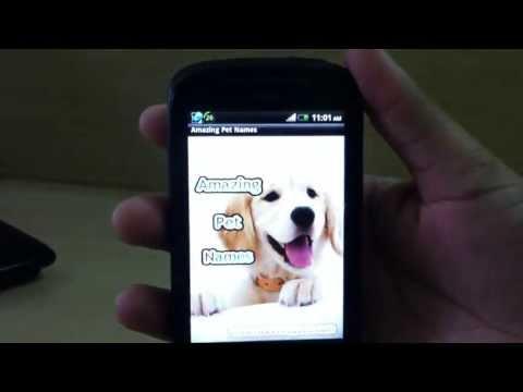 Video of Pet Names