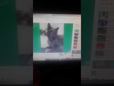 Watching some funny cat videos