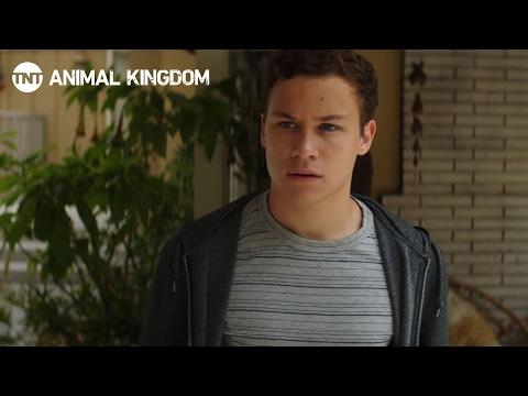 Animal Kingdom 1.07 Preview