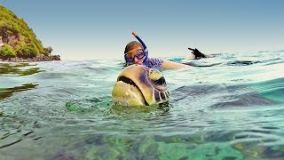 Snorkel with turtles in Apo island