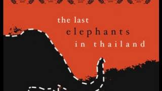 Last Elephants In Thailand - 40 Minute Documentary - Trailer