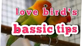 love bird's fisher Ko kon se mounth me breed le na chia or rest Dena chia