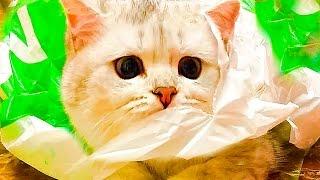Пранки над Симкой Видео для детей Розыгрыши и Party для Кошечки Kittens Prank