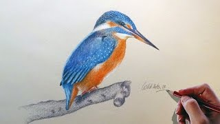 Drawing A Kingfisher Easy And Simple Steps  Drawn by using Prismacolor Premiere colored pencils and base with water color.Time Lapse Drawing.Time taken around 1.45 hours.Background Music : Intractable by Kevin Macleod.If you like my video please don't forget to subscribe.Thanks for watching.