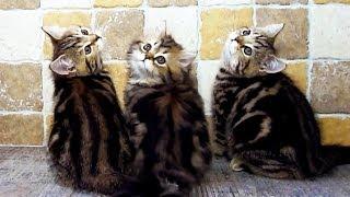 Веселая зарядка для котят