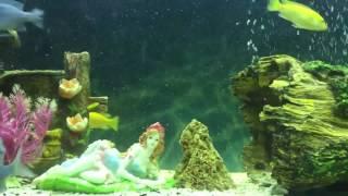 Eğlenceli balıklar