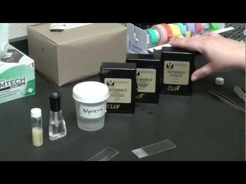 Mounting Your Specimen (видео)