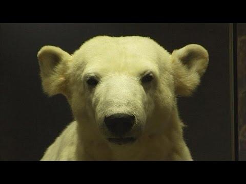Le retour posthume de Knut, célèbre ours blanc - le mag (видео)